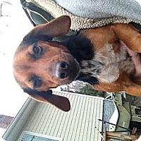Adopt A Pet :: Daisy - selden, NY