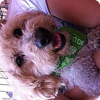 Adopt A Pet :: J.J. - North Hollywood, CA