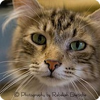 Adopt A Pet :: Mr. T - Byron Center, MI