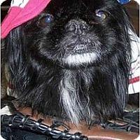 Adopt A Pet :: Shamu - Mays Landing, NJ