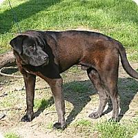 Adopt A Pet :: Gander - Toledo, OH