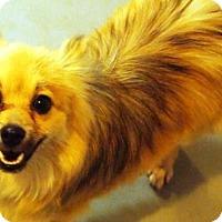 Adopt A Pet :: Rudy - Prole, IA