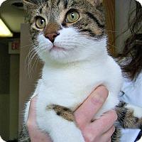 Adopt A Pet :: Alonzo - Toledo, OH