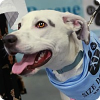 Adopt A Pet :: Arundel - Baltimore, MD