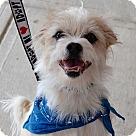 Adopt A Pet :: Stevie