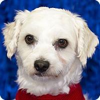 Adopt A Pet :: ALFIE - San Diego, CA