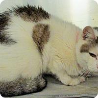 Adopt A Pet :: SNOWFLAKE (foster care) - Philadelphia, PA