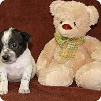 Adopt A Pet :: Linen Closet - Salem, NH