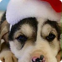 Adopt A Pet :: Albion - Carteret/Eatontown, NJ
