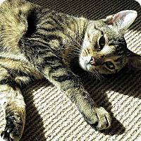 Adopt A Pet :: Chelsa - Fallbrook, CA