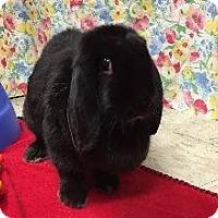 Adopt A Pet :: Leona - Woburn, MA