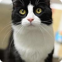 Adopt A Pet :: Mojito160306 - Atlanta, GA
