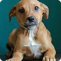 Adopt A Pet :: Garnett - Waldorf, MD
