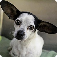 Adopt A Pet :: Kiwi - Picayune, MS