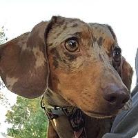 Adopt A Pet :: Darling - Alden, NY