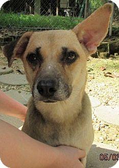 Terrier (Unknown Type, Medium)/Hound (Unknown Type) Mix Dog for adoption in Bay Springs, Mississippi - S967-D Greta
