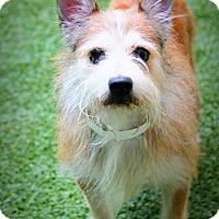 Adopt A Pet :: Napoleon - Ft. Lauderdale, FL