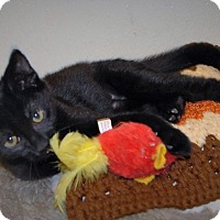 Adopt A Pet :: Haas - Wilmington, OH