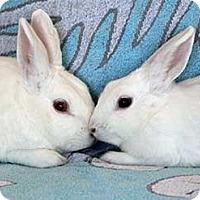 Adopt A Pet :: Clifford - Tustin, CA