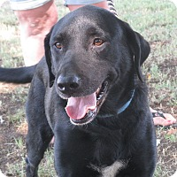 Adopt A Pet :: Bootsie - Turlock, CA
