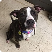 Adopt A Pet :: Licorice- Ohio - Fulton, MO