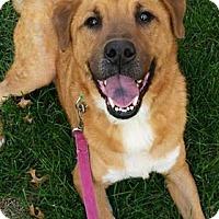 Adopt A Pet :: Melvin - Sharon Center, OH