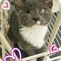 Adopt A Pet :: Trinity - Westbury, NY
