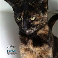 Adopt A Pet :: Adele - Belle Chasse, LA