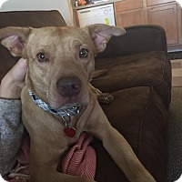 Adopt A Pet :: Sebastian - Arlington, MA
