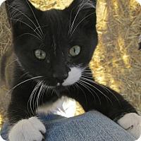 Adopt A Pet :: Jace - Buhl, ID