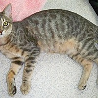 Adopt A Pet :: Zepher - Youngsville, NC
