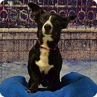 Adopt A Pet :: Marshall - Lebanon, MO