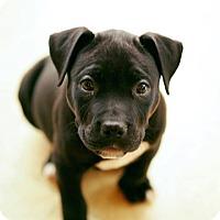 Adopt A Pet :: Moet - Dayton, OH