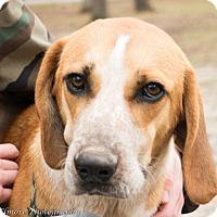 Adopt A Pet :: Kubo - Daleville, AL
