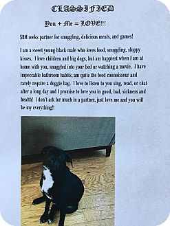 Labrador Retriever Mix Puppy for adoption in Summerville, South Carolina - Juneau