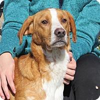 Adopt A Pet :: Napoleon - Windsor, VA
