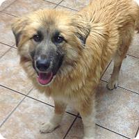Adopt A Pet :: Buffy - Westport, CT