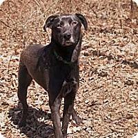 Adopt A Pet :: Benjamin - Lewisville, IN