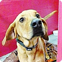 Adopt A Pet :: Beau - in Maine - kennebunkport, ME