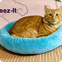 Adopt A Pet :: Cheez-it - Medway, MA