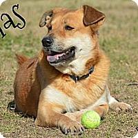 Adopt A Pet :: Silas - El Campo, TX