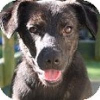 Adopt A Pet :: BRANDI - Wakefield, RI