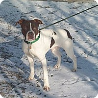 Adopt A Pet :: Buddy - Paris, IL