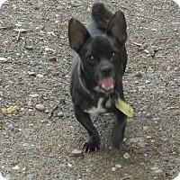 Adopt A Pet :: Fang - Chandlersville, OH