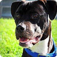 Adopt A Pet :: Hitch - Orlando, FL
