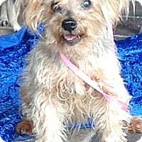 Adopt A Pet :: Nina - Clermont, FL
