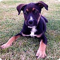 Adopt A Pet :: Elizabeth Bennett - Phoenix, AZ