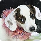 Adopt A Pet :: Jade