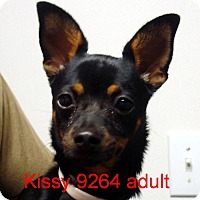 Adopt A Pet :: Kissy - baltimore, MD