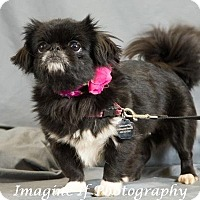 Adopt A Pet :: Leia - Tyler, TX